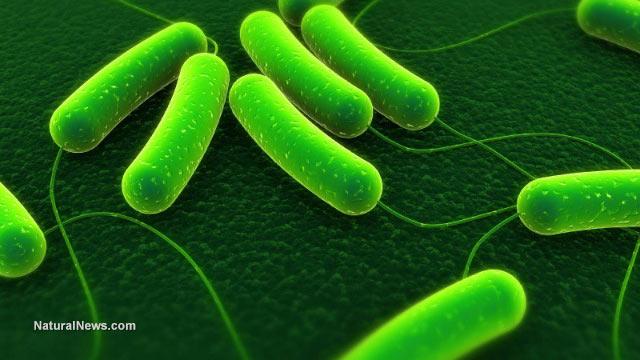 Infectious bacteria