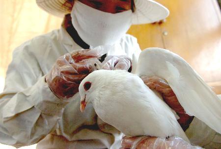 bird flu crisis in hong kong essay