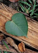 Amazon Herb Company