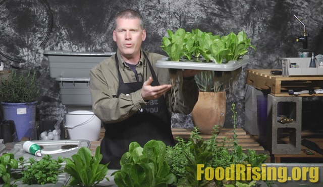 Food Rising grow box