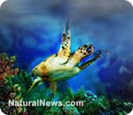 Sea turtles