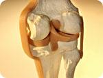 Osteoporosis drugs