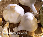 The immune boosting power of garlic – 4/4/12