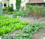 Four ways to creatively grow…permaculture – 4/7/12
