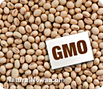gmo-foods-lead-to-total-sterility-by-the-third-generation