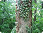 Forest density