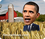 [Imagem: Obama-Wheat-Farm.jpg]