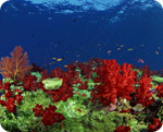 Sea minerals