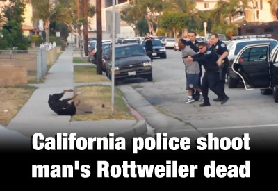 Militarized police gone wild across America; terrorizing citizens, shooting pet dogs CA Police Shoot Rottweiler Dead 400