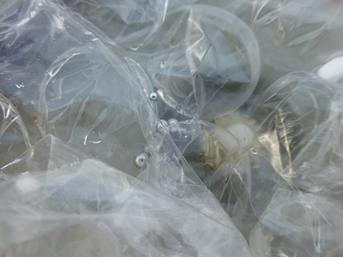 Michigan State University sells deadly toxic waste to the public on its surplus website mercury bubble wrap 1 500