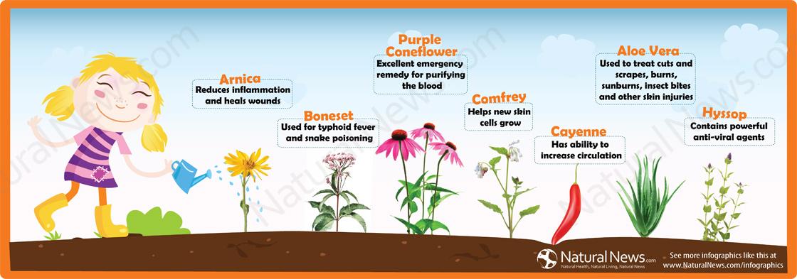 Seven Powerful Emergency Herbal Remedies