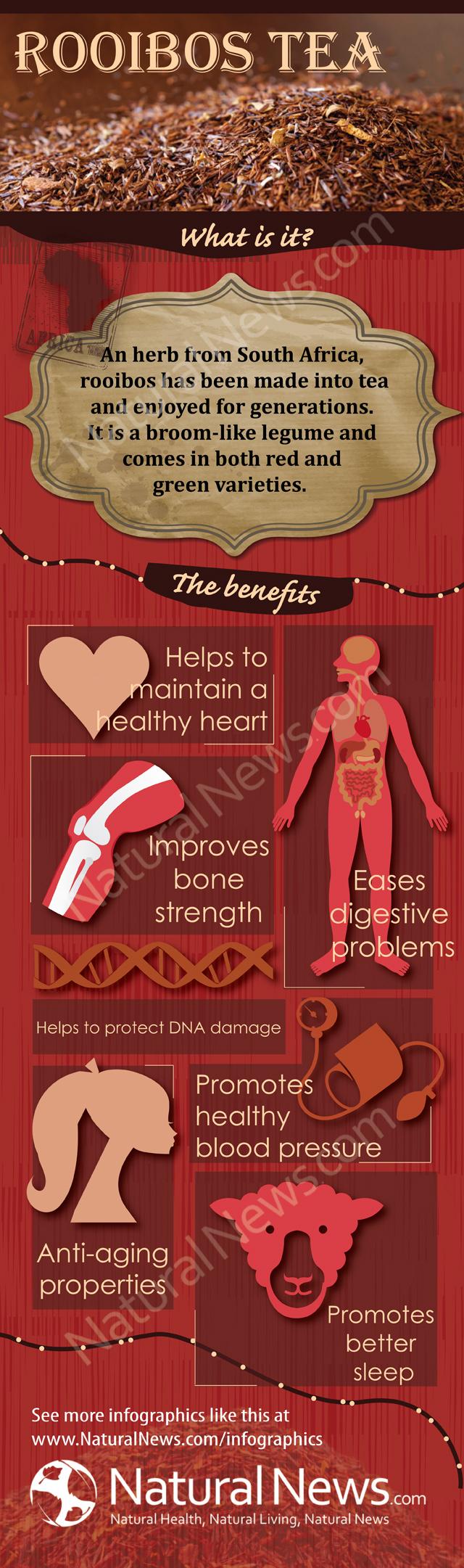 Benefits of Rooibos Tea