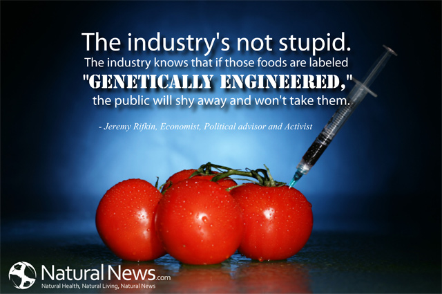 genetically modified food is necessary in Memo/10/58 brussels, 2 march 2010 questions and answers on genetically modified organisms (gmo's) why is the commission taking this decision for the cultivation of the gm amflora potato now.