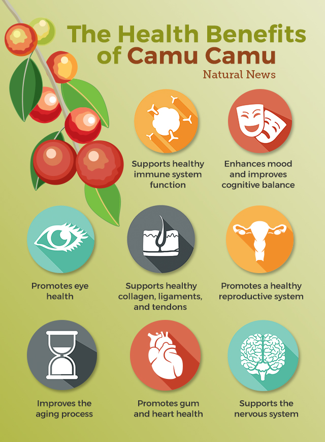 The most potent food source of vitamin C on the planet and how it can supercharge your health The-health-benefits-of-camu-camu