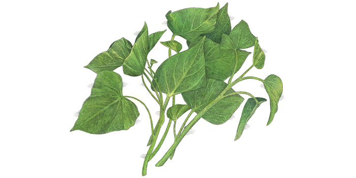 Image: Give your health and well-being a major boost with nutritious sweet potato leaves
