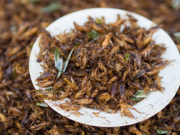 Image: Crickets, grasshoppers better source of iron and nutrients than beef