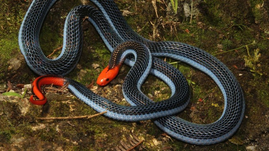 Image: Venom from the world's deadliest snakes could be used for pain relief