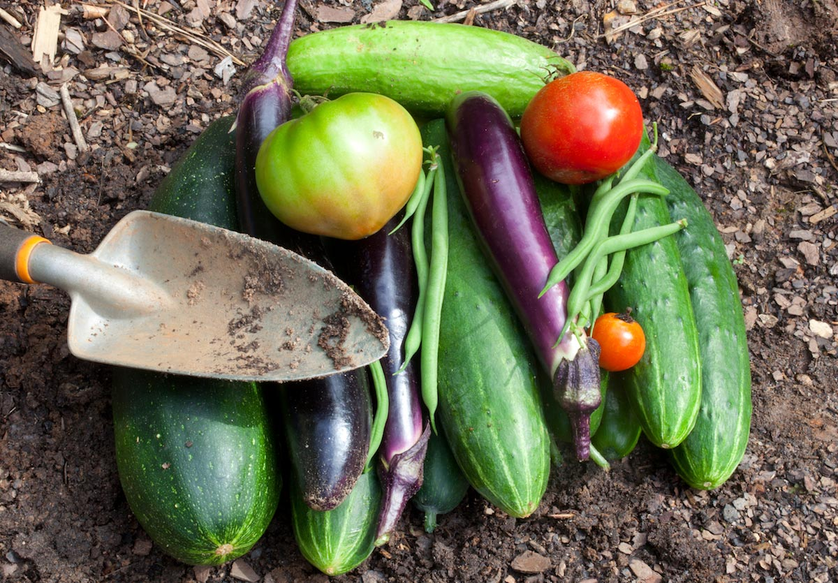 Image: Easy cukes: How to grow cucumbers for summer