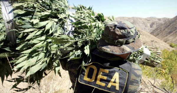 "Image: Former DEA chief propagandist says the agency knows marijuana is safe … but it's the agency's ""cash cow"" for more funding"