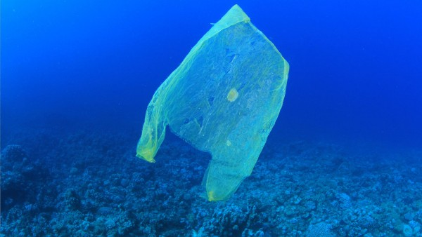 Image: Scientist develops biodegradable, edible non-plastic bags to halt the continues plastic pollution of the world