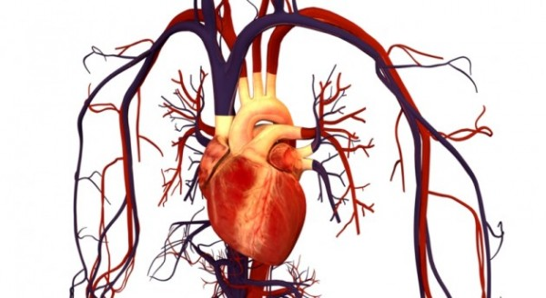 Image: Vitamin C is a powerful heart healer, especially after surgery