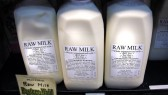 Almost a dozen raw milk bills to be voted on this spring