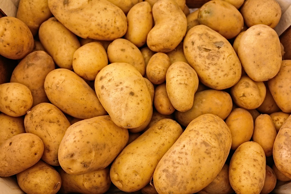 Image: Potatoes the next superfood? Research reveals a host of health benefits that could sustain you for life