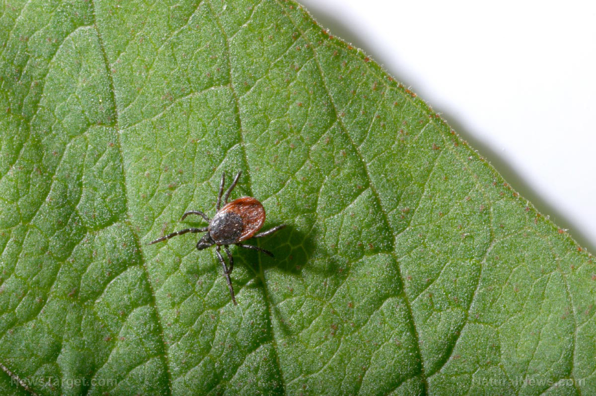 Image: Lyme disease is about to explode across North America….with no cures in sight