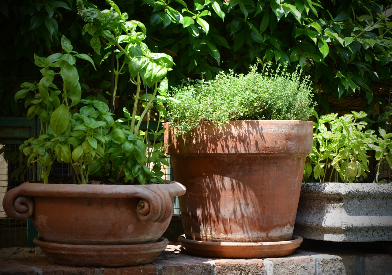 Image: Make time for thyme: How to grow your own thyme