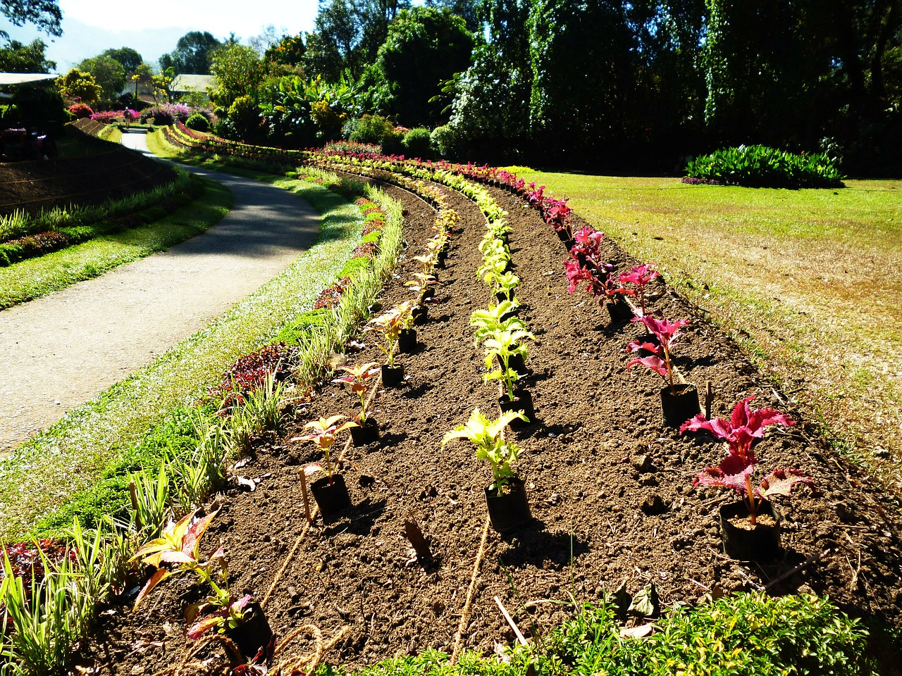 Superbe Image: How To Effortlessly Start A Flower Bed From Scratch