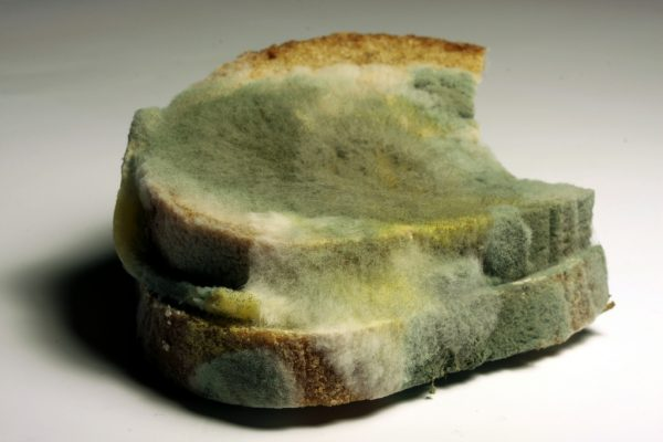 Image: Is it safe to cut the moldy parts off a loaf of bread and eat the rest?