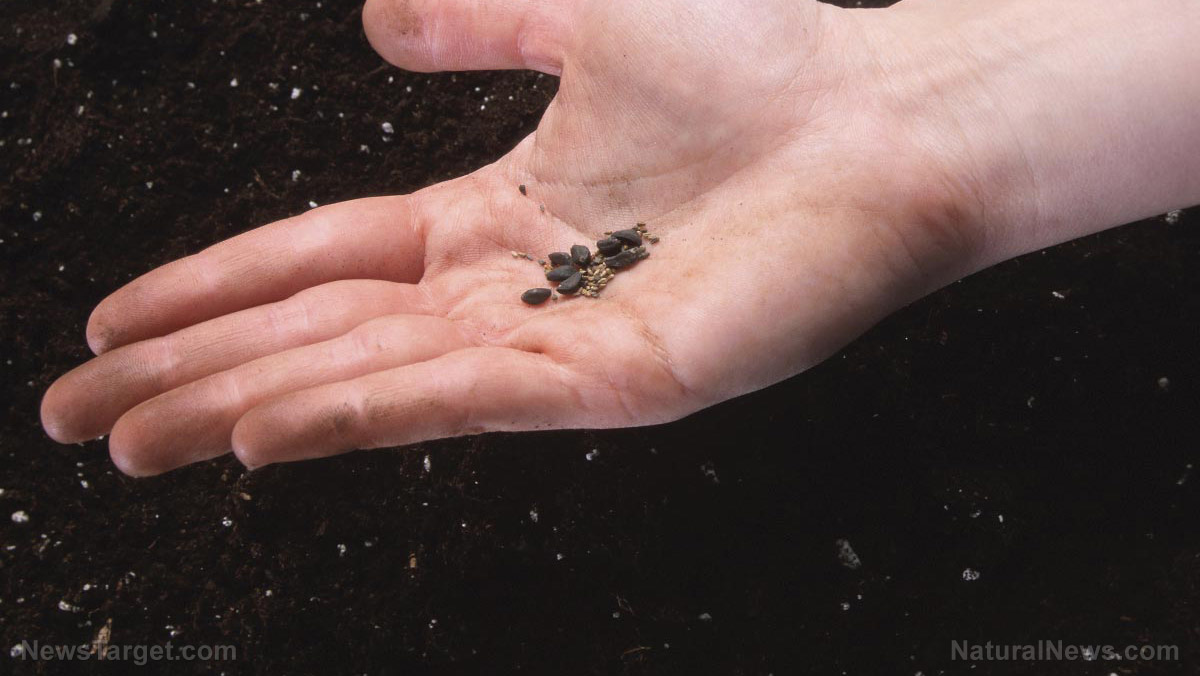 Here Are 8 Seeds That Are Great For Long Term Storage