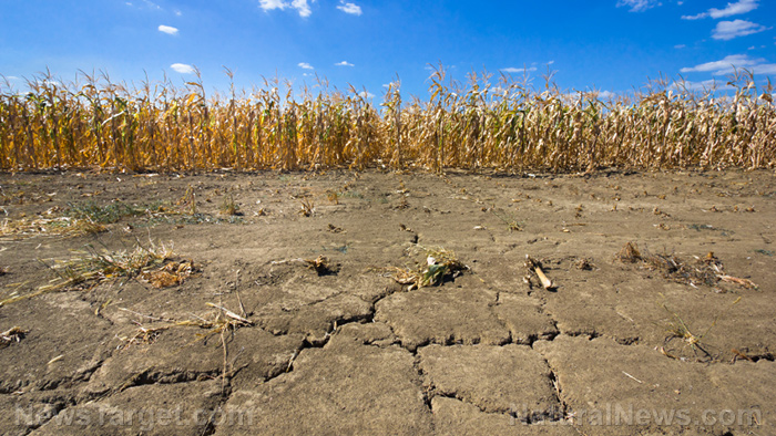 The climate change agenda exposed: Lowering CO2 will lead to mass starvation, planet-wide food scarcity and the rise of government tyranny Drought-Corn-Field-Dry-Soil-Farm-Drought