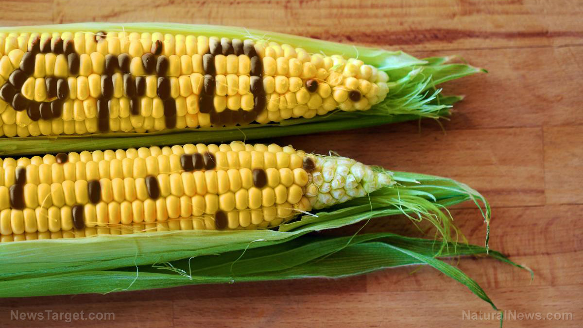 "Image: False climate change narrative now being used to push genetically modified ""drought resistant"" corn on Africa"