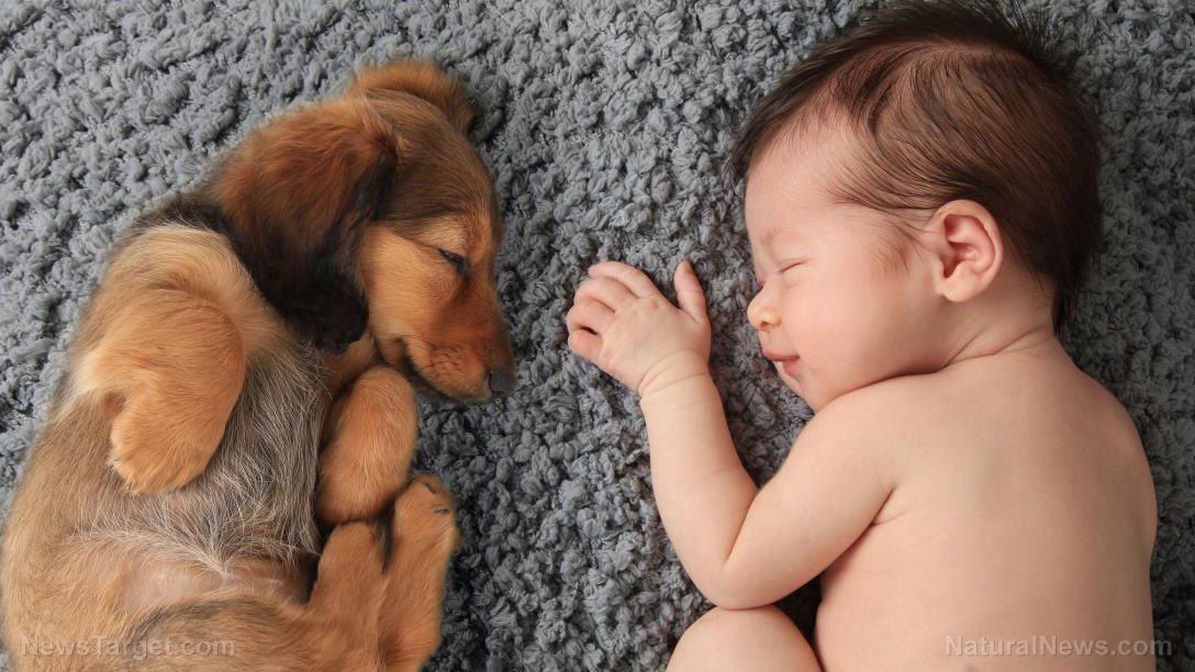 Image: Are puppies the latest allergy treatment? Recent studies show protective effects against eczema, asthma