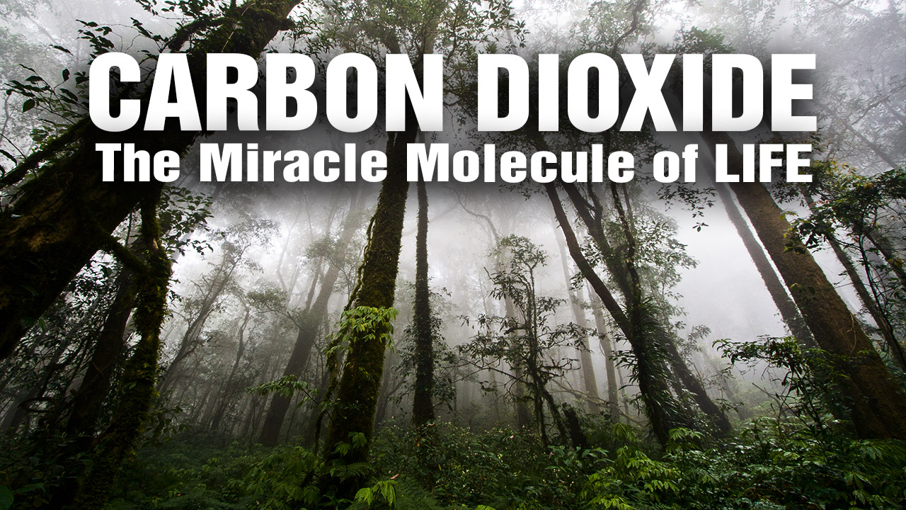 "Image: Carbon Dioxide revealed as the ""Miracle Molecule of Life"" for re-greening the planet"