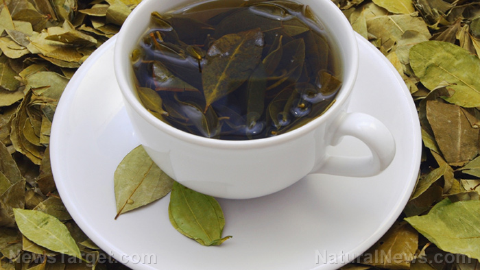 Image: Green tea catechins found to protect the brain from cognitive decline