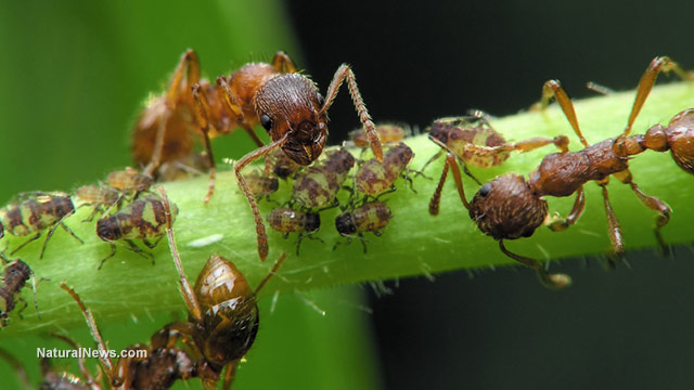 Image: Keep your home ant free with these 5 all-natural ant repellents