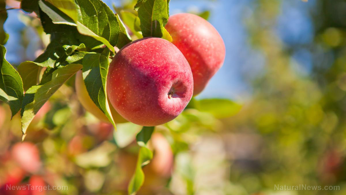 Image: Detroit farmer's market boycotts local apple orchard owner for believing in Christianity