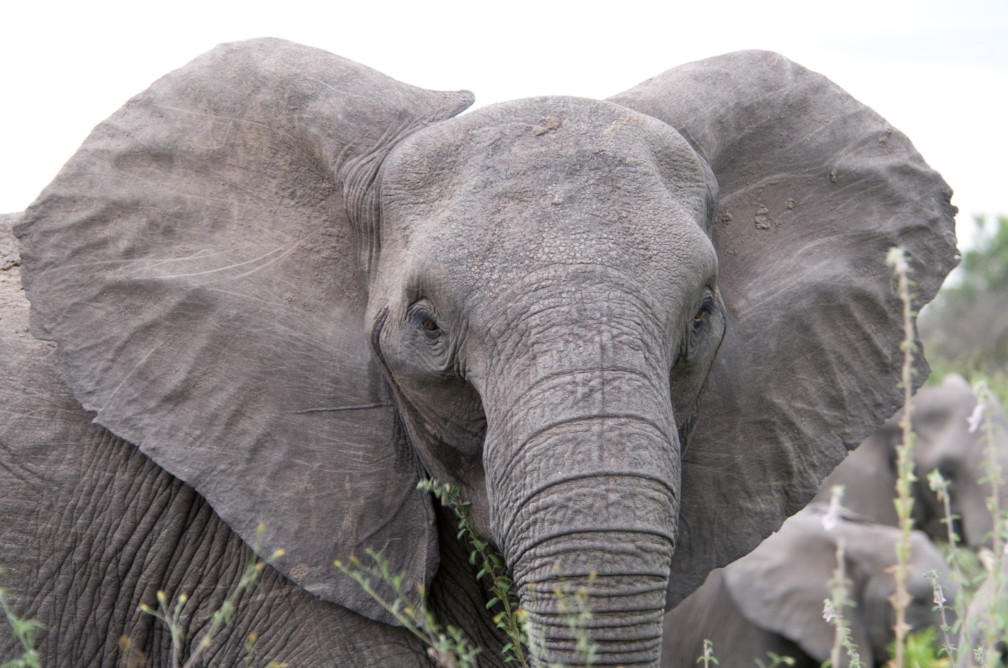 Image: TNT-sniffing elephants could soon be assisting landmine-location efforts in Angola