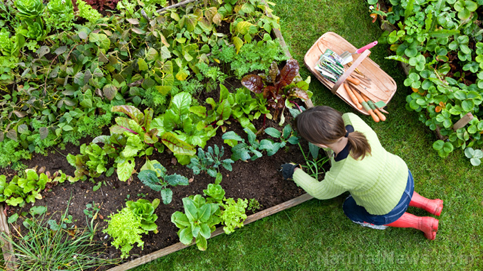 Image: Tips for starting your own organic garden