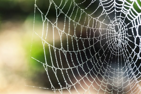 "Image: Bionic spider silk: Researchers have developed a super strong ""biocomposite"" with the potential to revolutionize numerous industries"