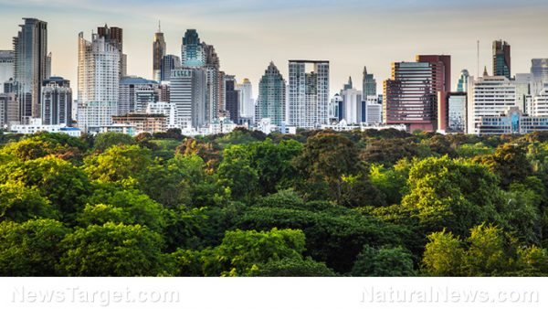 More proof carbon dioxide is essential to planetary health: Research finds urban trees are growing faster worldwide City-Park-Trees-Town-e1513666081596