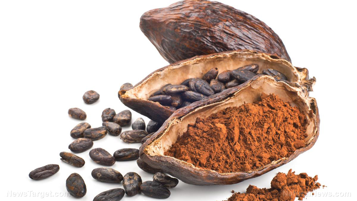 Image: Stressed-out cacao trees produce more nutritionally potent chocolate – new research