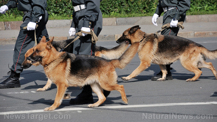 Image: Guard dog: 5 breeds that are perfect for protecting you