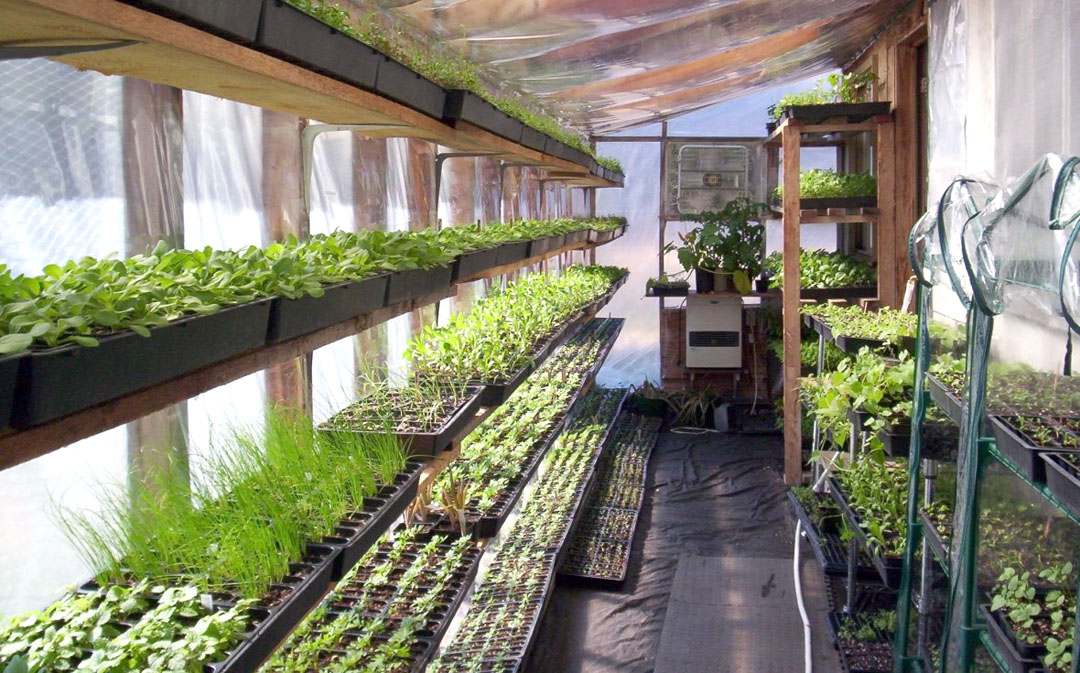 Image: Walipini greenhouse: What it is, why you need one, and how to build it