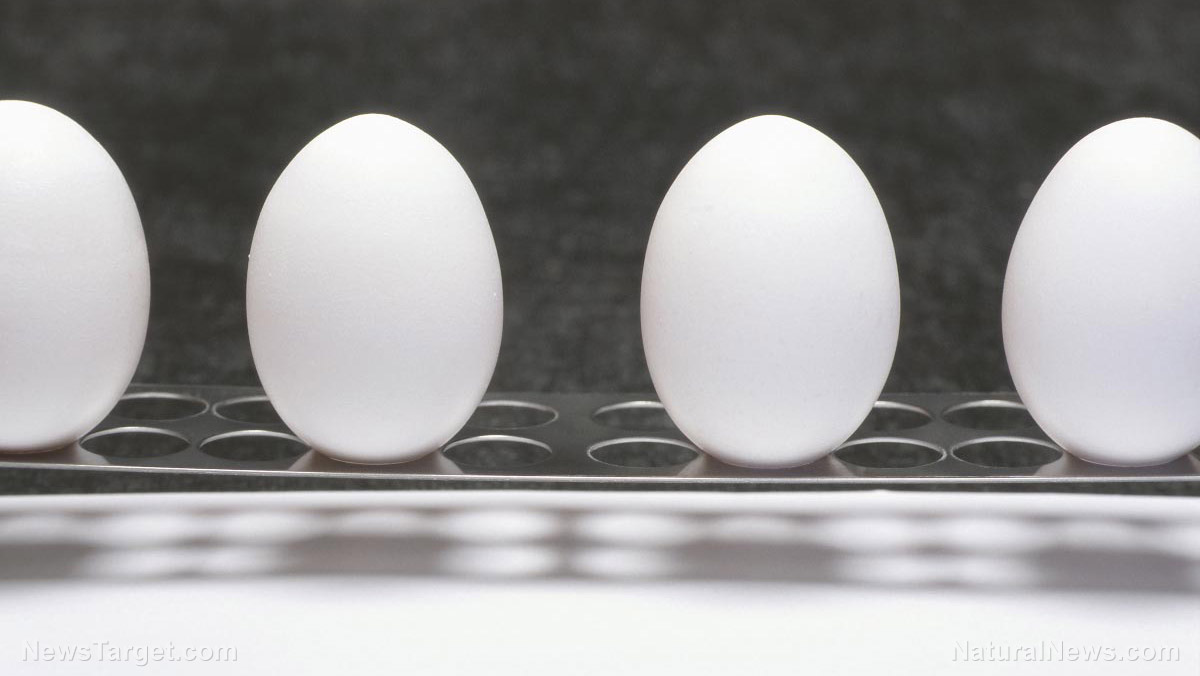 "Image: DISCOVERY: Egg whites the ""missing link"" for low-cost production of clean hydrogen fuel"