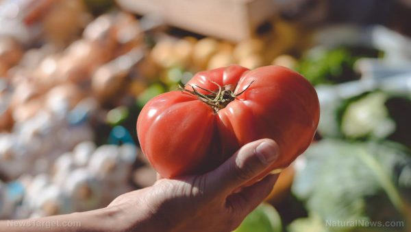 Lycopene, the pigment that gives tomatoes their color, is one of the most powerful anti-cancer agents yet discovered Tomato-Vegetables-Fruit-e1527020891747