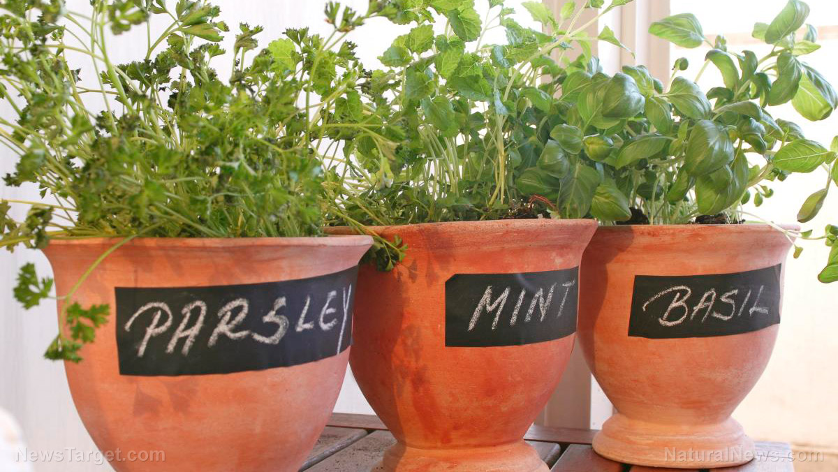 Image How To Start An Indoor Garden In Your Apartment