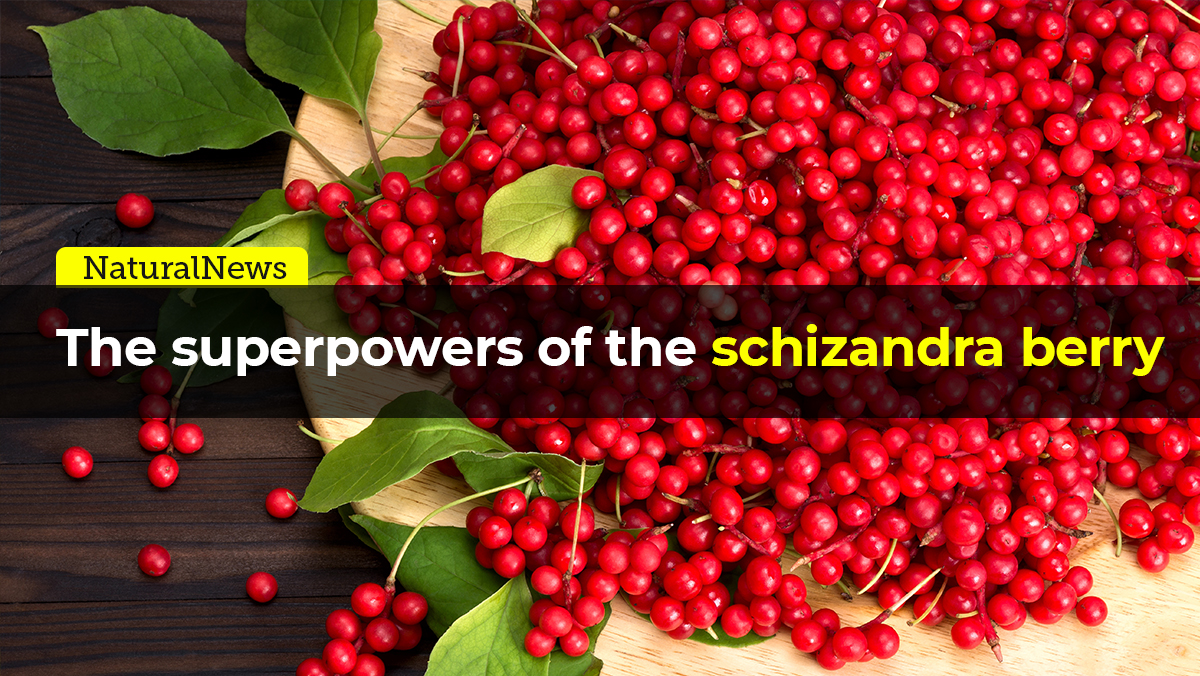 Image: The super powers of the schizandra berry